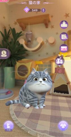 タイムプリンセスの猫の家画像